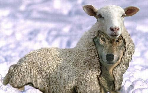 lobos+vestido+de+oveja